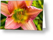Throat Of Lily Greeting Card