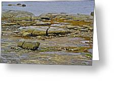 Thrombolites Up Close In Flower's Cove-nl Greeting Card
