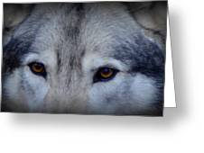 Through A Wolf's Eyes Greeting Card