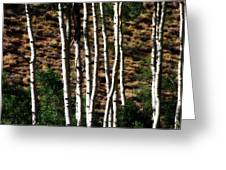 Through The Aspens Greeting Card