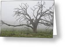 Through The Fog Greeting Card