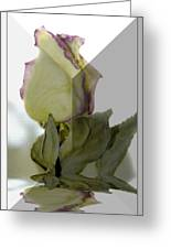 Through The Prism  A Rose Greeting Card