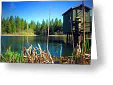 Through The Reeds At Grace Lake Greeting Card