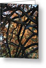Through The Trees 2 Greeting Card