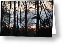 Through The Trees Greeting Card by Ella Char