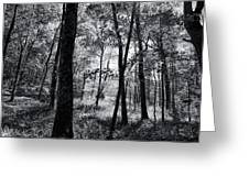 Through The Trees In Black And White Greeting Card