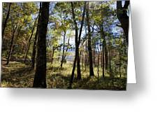 Through The Trees Greeting Card