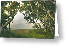 Through The Twisty Trees Greeting Card