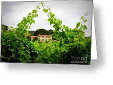 Through The Vines Greeting Card by Lainie Wrightson