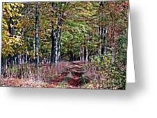 Through The Woods Greeting Card