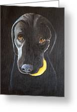 Throw The Ball Greeting Card