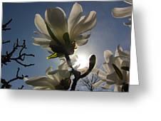 Thru The Flowers Greeting Card