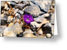Thumb Tack Beauty Greeting Card by Rebecca Christine Cardenas