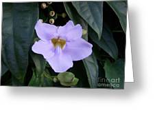 Thunbergia Greeting Card