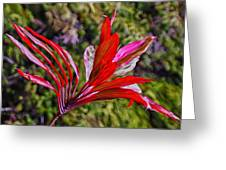 Red Ti Plant Greeting Card