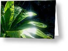 Ti Light Greeting Card