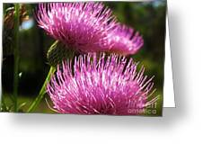 Tickled Thistle Greeting Card