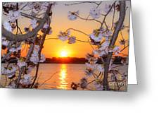 Tidal Basin Sunset With Cherry Blossoms Greeting Card
