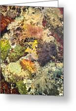Tidal Pool Color Greeting Card by Debbie Green