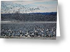 Tidal Wave Of Geese Greeting Card