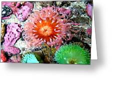 Tide Pool Creatures Greeting Card