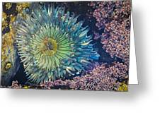 Tide Pool Sea Anemone Greeting Card