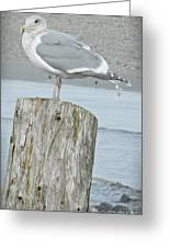 Tide Watcher Greeting Card
