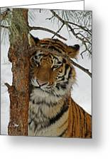 Tiger 2 Greeting Card