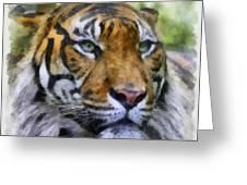 Tiger 26 Greeting Card