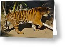 Tiger Beat Greeting Card