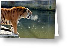 Tiger Breathing Into Cold Air By The Water Greeting Card