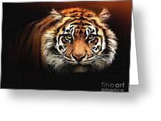 Tiger Bright Greeting Card