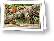 Tiger By The Log Greeting Card