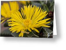 Tiger Claw Plant Greeting Card