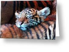 Tiger Cub Nap Greeting Card
