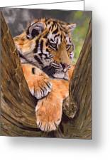 Tiger Cub Painting Greeting Card by David Stribbling