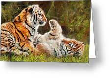 Tiger Cubs Playing Greeting Card by David Stribbling