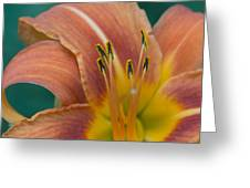 Tiger Daylily Greeting Card