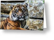 Tiger Facing The Crowd Greeting Card