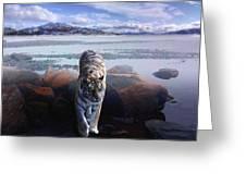 Tiger In A Lake Greeting Card