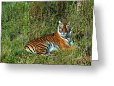 Tiger In The Grass Greeting Card