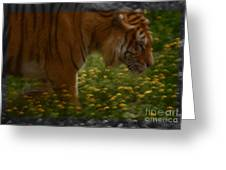 Tiger In The Midst Of Buttercups Greeting Card