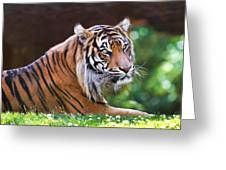 Tiger In The Sun Painting Greeting Card