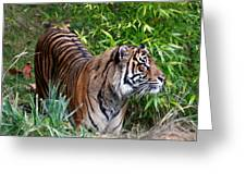 Tiger In The Vast Jungles Greeting Card