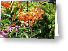 Tiger Lilies Greeting Card
