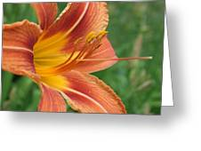 Tiger Lilly Greeting Card