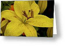 Tiger Lilly Shower Greeting Card