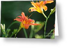 Tiger Lily And Bud   # Greeting Card