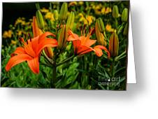 Tiger Lily Blossoms Greeting Card