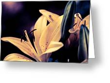Tiger Lily Blue Greeting Card